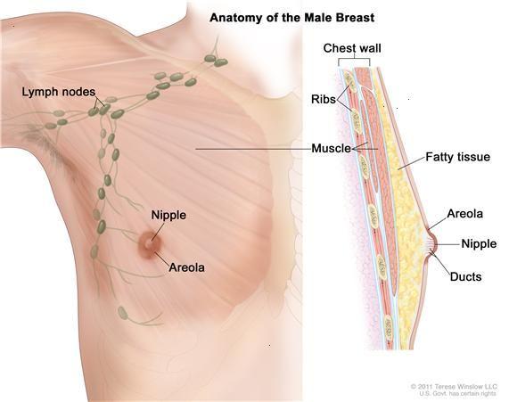 cancer-sein-homme