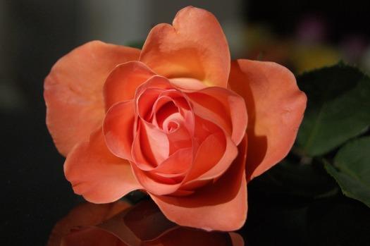 flower-3232888_1920